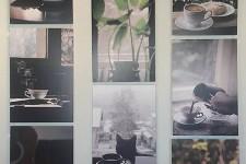 Kafa, uzbudljiva priča o dobrom ukusu – izložba Prirodnjačkog muzeja
